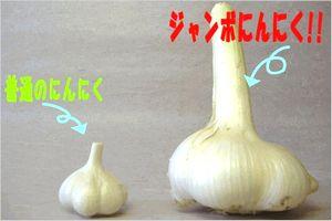 ジャンボにんにく 栽培方法